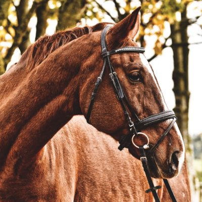 horse-3609347_1920