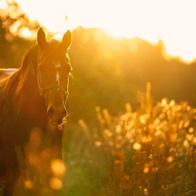 horse-4810484_1920