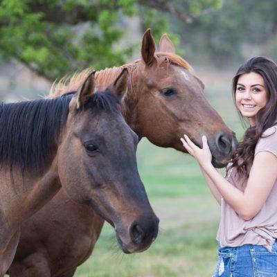 horses-1996285_1920